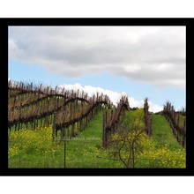 More about the 'Spring Vineyards in Napa' product