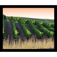 More about the 'Sunlit Vineyards at Dusk' product