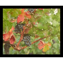 More about the 'Fall Grapevines Collage' product