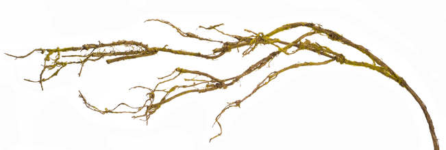 "Twig Branch (Set of 12) 47""H Paper/Wire"