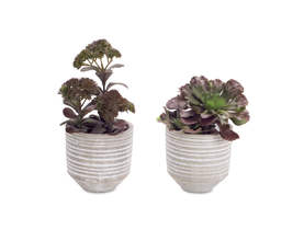 Potted Succulent (Set of 4)