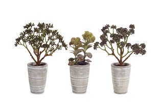 Potted Succulent (Set of 3)