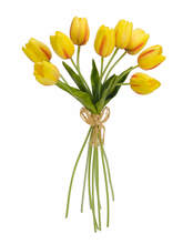 Tulip Bundle (Set of 6)