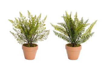 "More about the 'Potted Fern (Set of 4) 15.5""H' product"