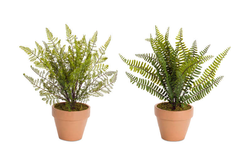 "Potted Fern (Set of 4) 15.5""H"