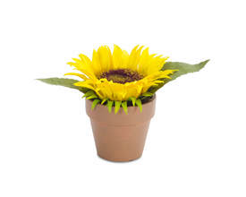 Potted Sunflower (Set of 4)
