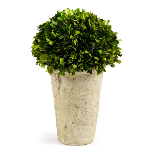 Boxwood Three-Quarter Ball In Pot