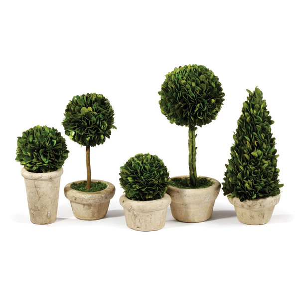 Boxwood Topiaries In Pots, Set Of 5