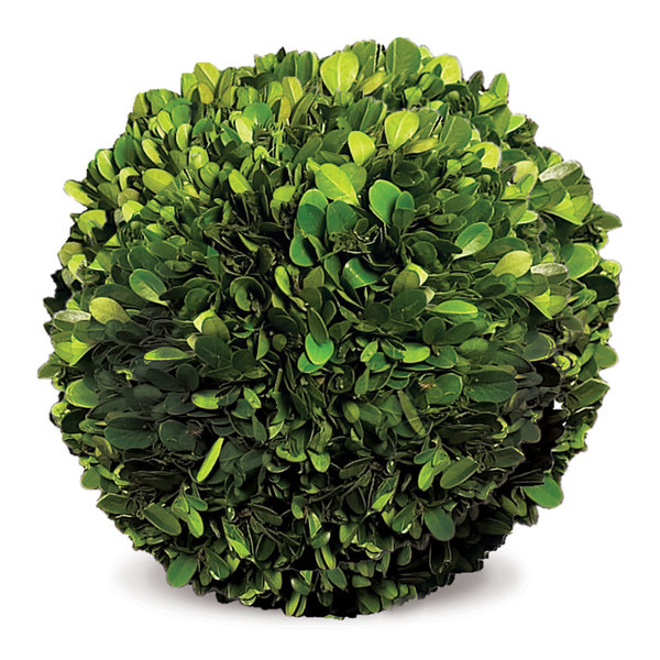 Boxwood Ball 8""