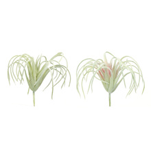 "More about the 'Air Plant (Set of 36) 4.5""H PVC' product"