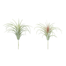"More about the 'Air Plant (Set of 24) 7""H PVC' product"