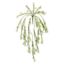 "More about the 'Asparagus Fern Vine (Set of 6) 33""L Plastic' product"