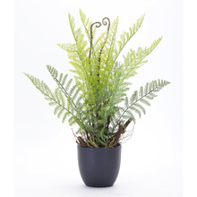 "More about the 'Fern Potted (Set of 2) 11"" x 18""H Plastic' product"