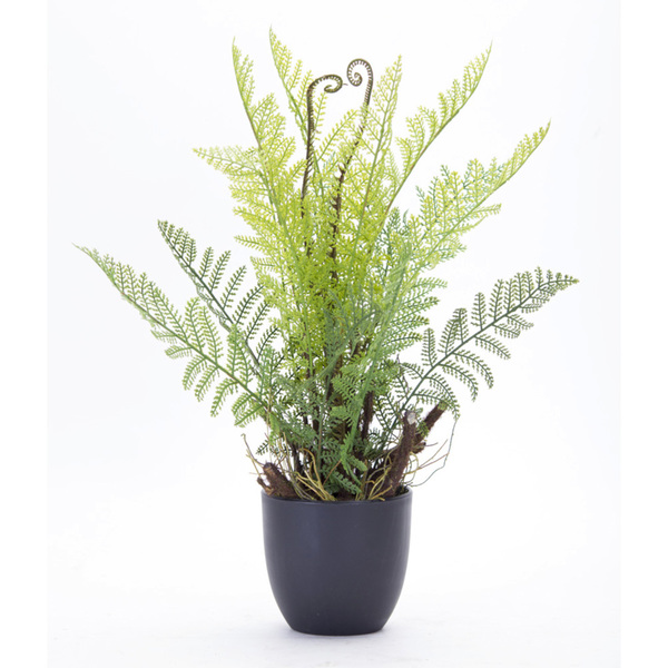 "Fern Potted (Set of 2) 11"" x 18""H Plastic"