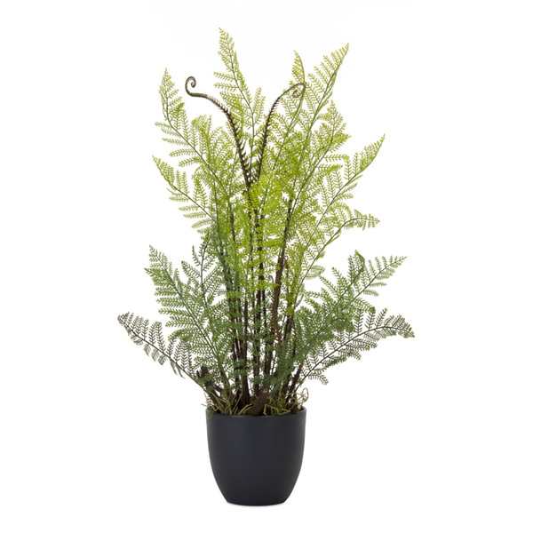 "Fern Potted (Set of 2) 13"" x 24.5""H Plastic"