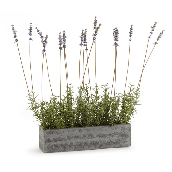 French Lavender In Trough 19""