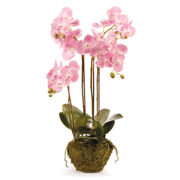 Phalaenopsis Orchid Drop-In 30""