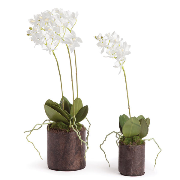 "Dendrobium Orchid Drop-Ins 16"" And 12"", Set Of 2"