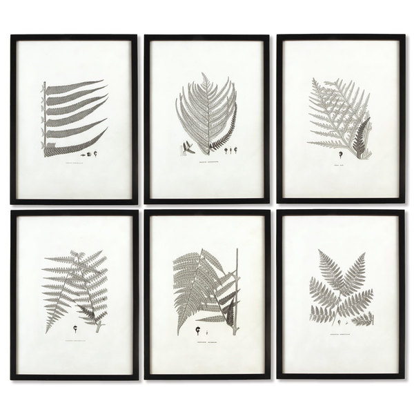 Framed Gray-Tone Fern Prints, Set Of 6