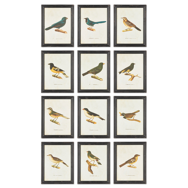 Framed Bird Prints, Set Of 12