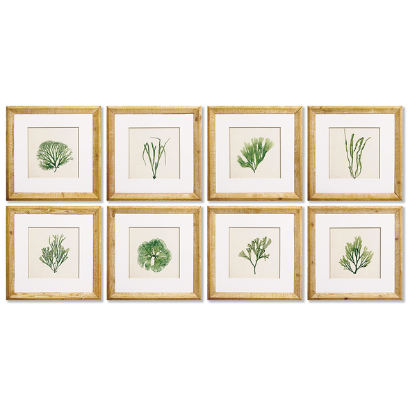 Seaweed Study, Set Of 8