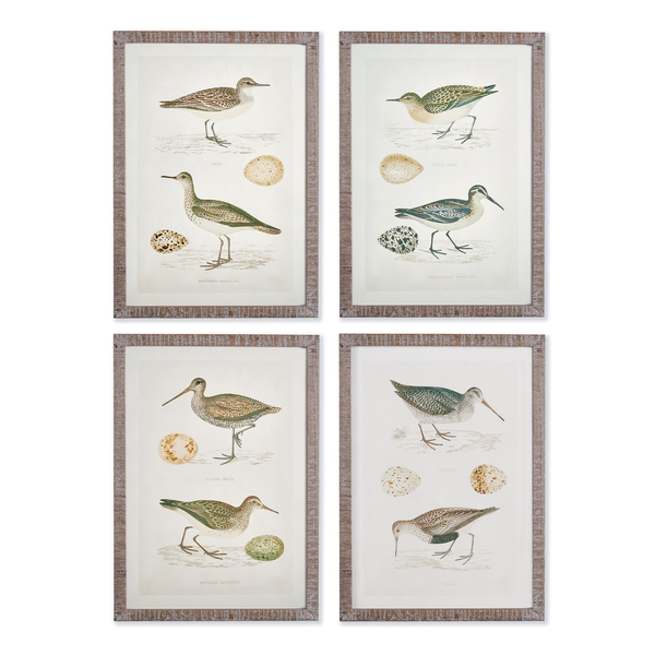Coastal Birds Study, Set Of 4