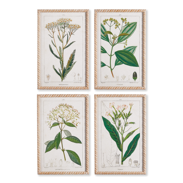 Meadow Botanical Study, Set Of 4