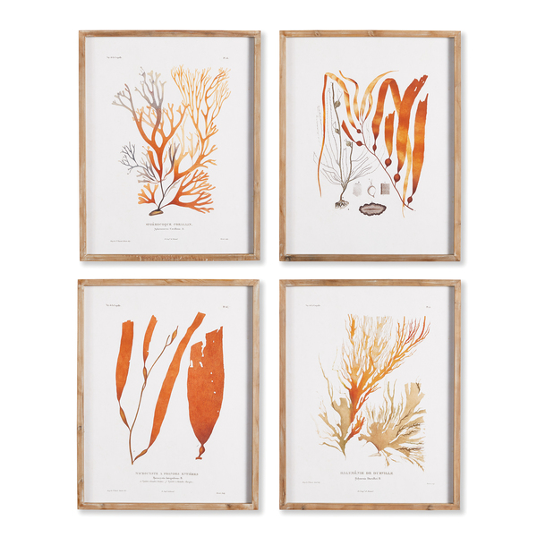 Coral Reef Study, Set Of 4