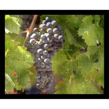 More about the 'Ripe Grapes Collage' product