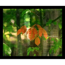 More about the 'Autumn Tree Leaves Collage' product