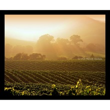 More about the 'Vineyards in Foggy Mist' product