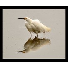 More about the 'Snowy Egret Reflection' product